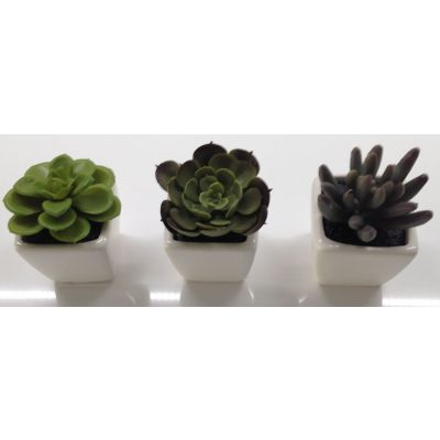 photo Lot de 3 minicactus