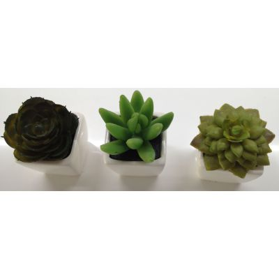 photo Lot de 3 minicactus 2